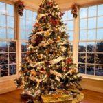 Oh Christmas Tree!  DIY Christmas Tree Ideas