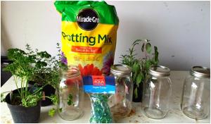 DIY Kitchen Garden