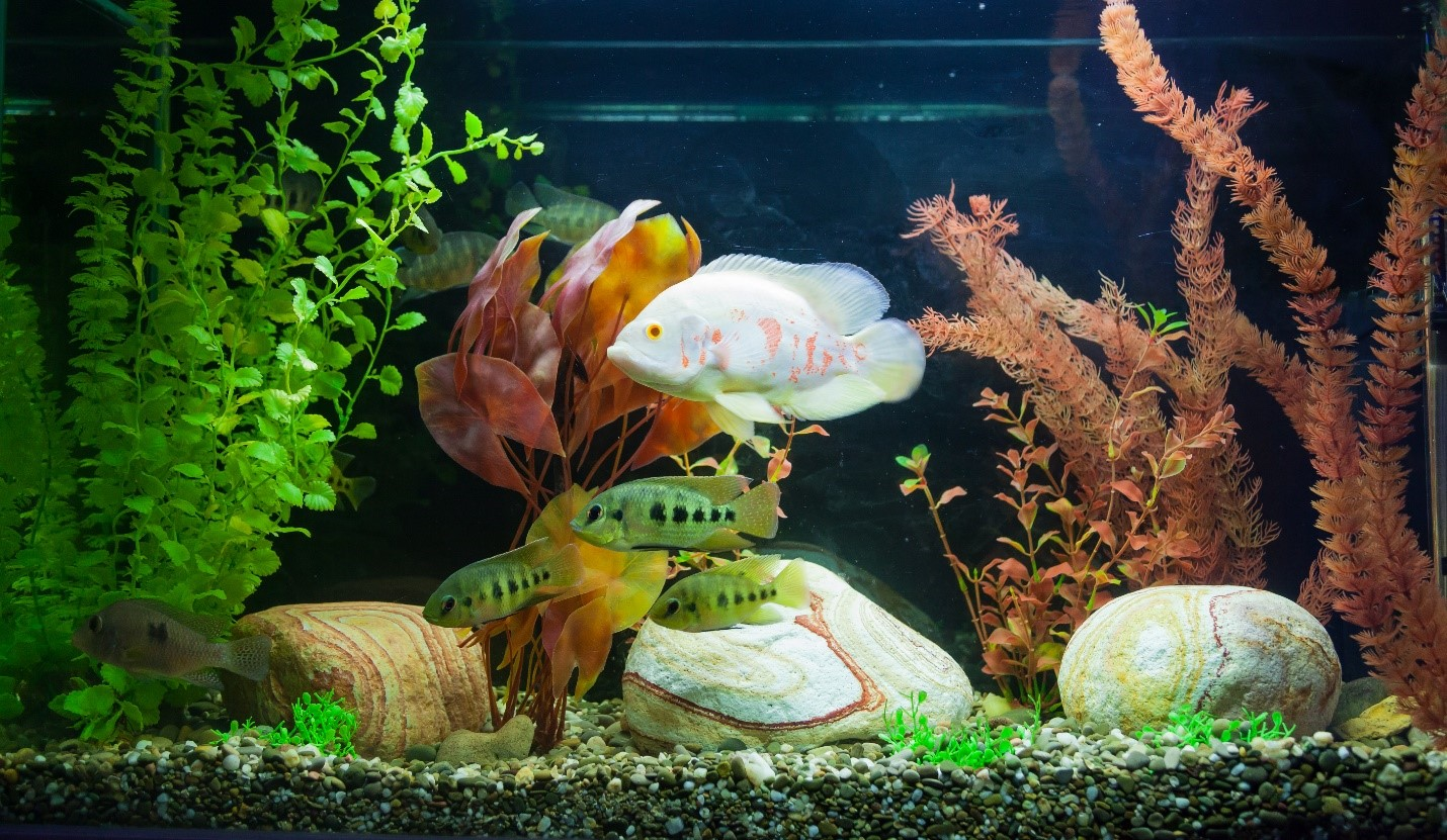Choosing Fish for a Freshwater Aquarium: A Quick Guide