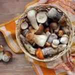 Mushroom Shelf-life: How to Tell When Mushrooms Go Bad