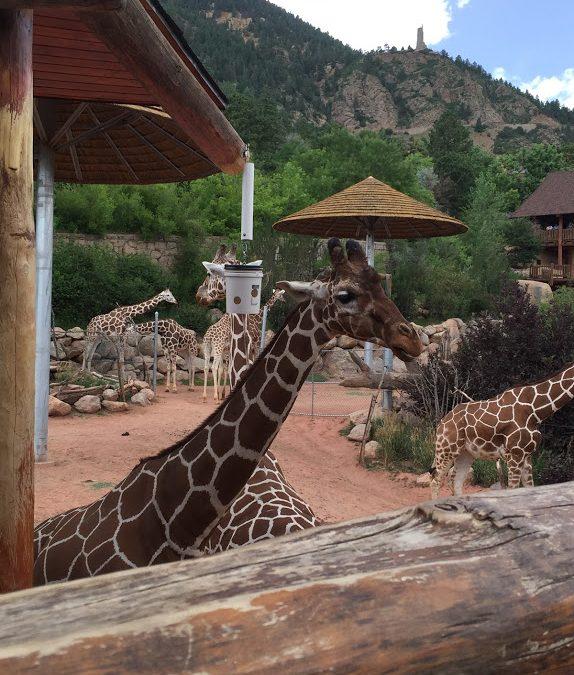 Virtual Tours of 7 Zoos Around the World