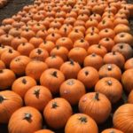 Pumpkin Patch - Great Family Fall Activity