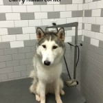 Petco's Self-Service Dog Wash, The BEST $10 Deal For Dogs!
