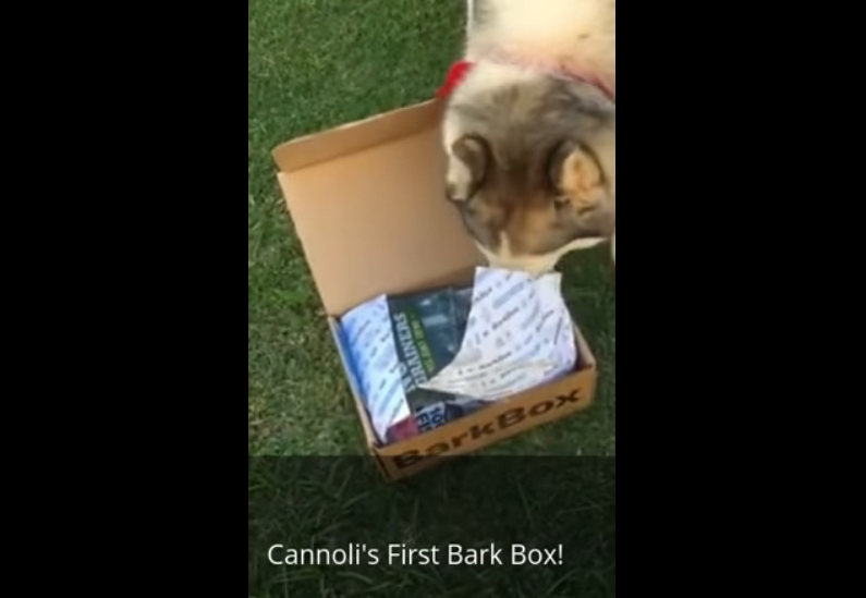 What's a Bark Box? – Super Fun Doggie Stuff!