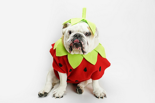 A Sweet Strawberry Costume for You and Your Pup
