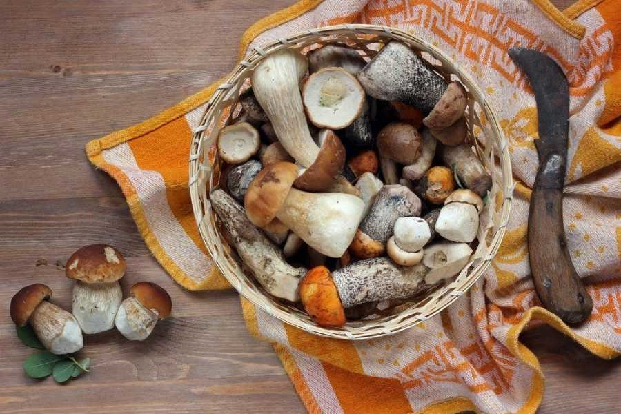 Mushroom Shelf-life: How to Tell When Mushrooms Go Bad