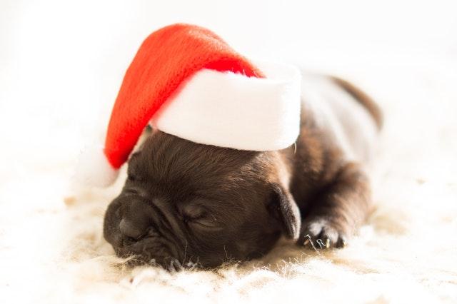 Adopting A Pup At Christmas