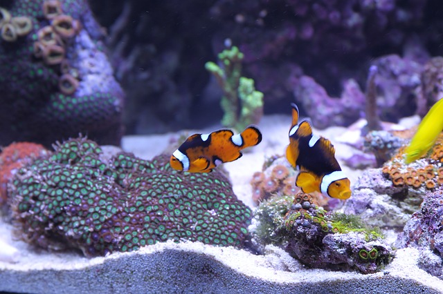 Four Reasons That Fish Make Perfect Pets