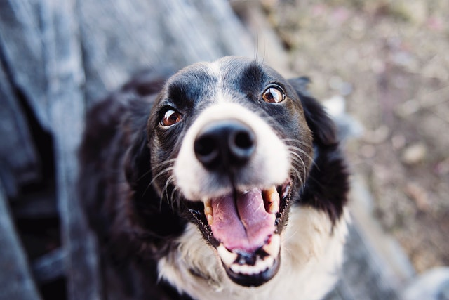 Thinking of Getting a Dog? Here are 8 Things You'll Need to Buy