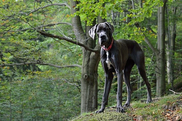 3 Questions To Ask Yourself Before Choosing A Large Dog Breed