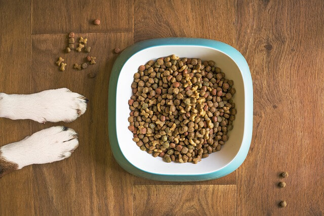 How To Select The Right Treats For Your Pup